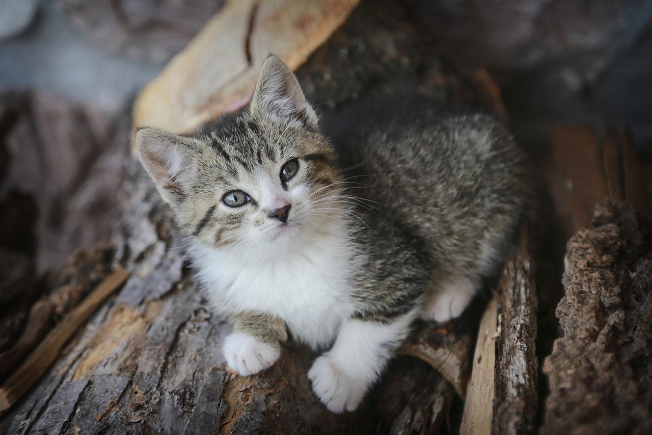 Cute Kitten in Seneca County (photo)
